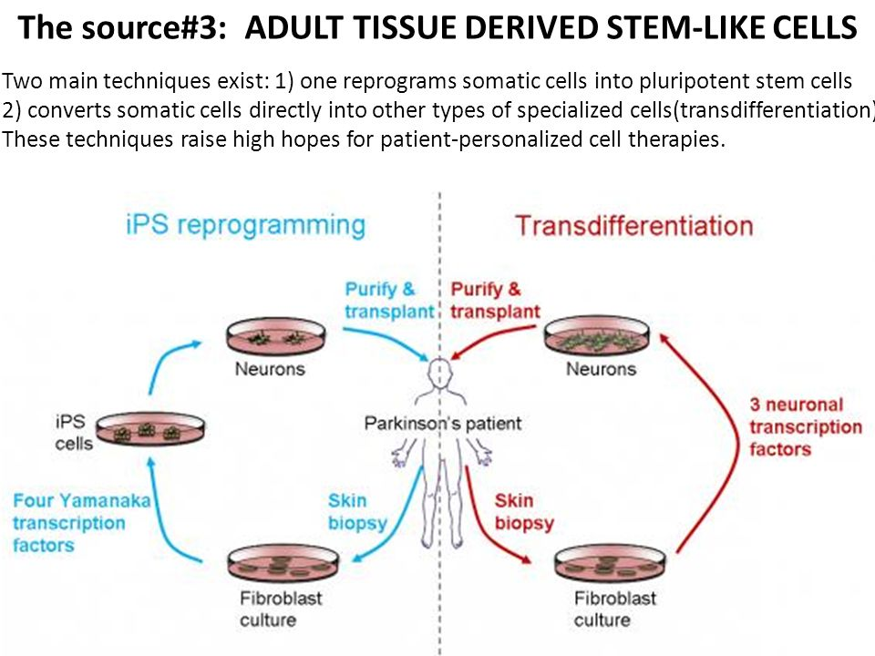 The source#3: ADULT TISSUE DERIVED STEM-LIKE CELLS Two main techniques exist: 1) one reprograms somatic cells into pluripotent stem cells 2) converts