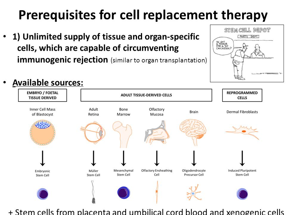 Prerequisites for cell replacement therapy 1) Unlimited supply of tissue and organ-specific cells, which are capable of circumventing immunogenic reje
