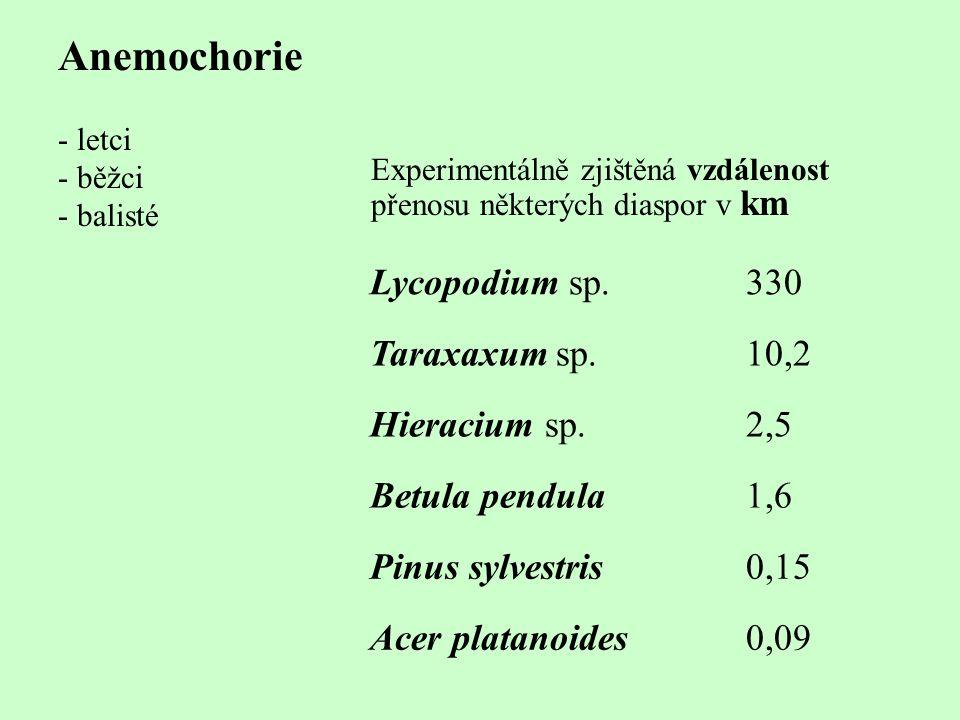 Anemochorie - letci - běžci - balisté Lycopodium sp.330 Taraxaxum sp.10,2 Hieracium sp.2,5 Betula pendula1,6 Pinus sylvestris0,15 Acer platanoides0,09