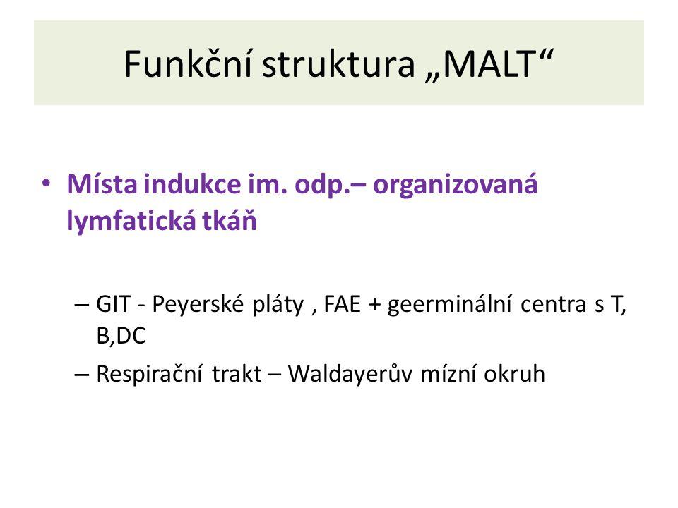 """Funkční struktura """"MALT Místa indukce im."""