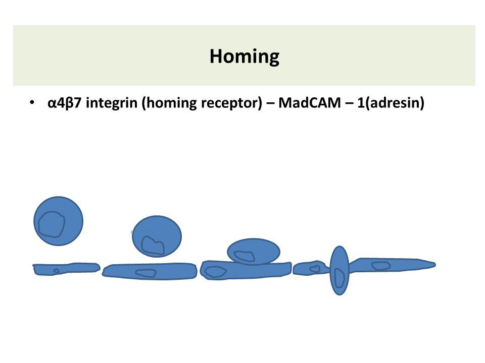 Homing α4β7 integrin (homing receptor) – MadCAM – 1(adresin)