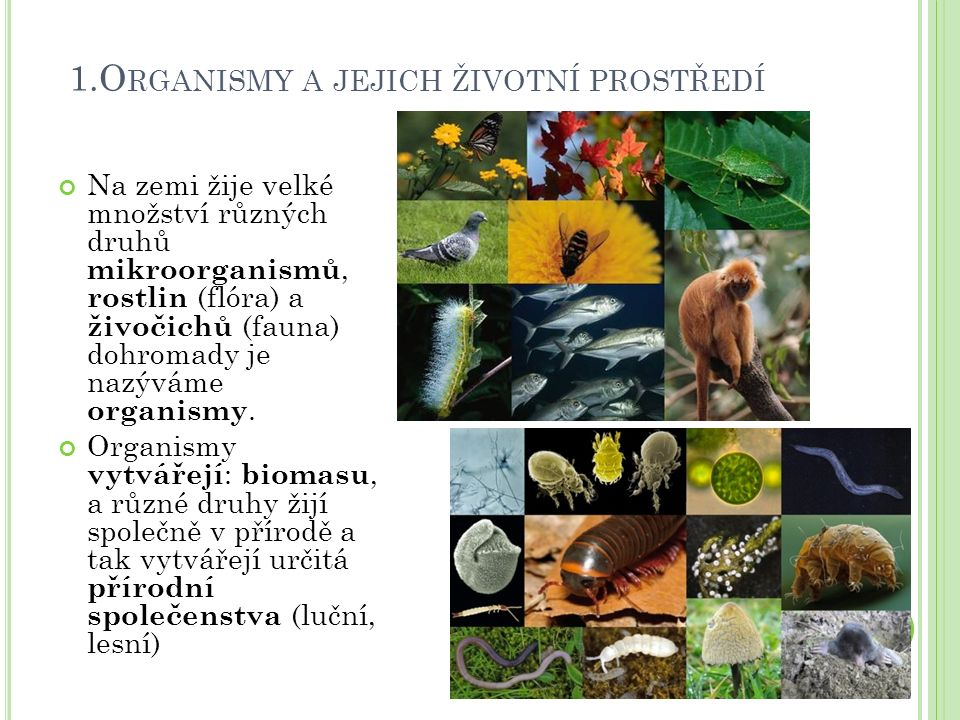 1.O RGANISMY A JEJICH ŽIVOTNÍ PROSTŘEDÍ Na zemi žije velké množství různých druhů mikroorganismů, rostlin (flóra) a živočichů (fauna) dohromady je nazýváme organismy.