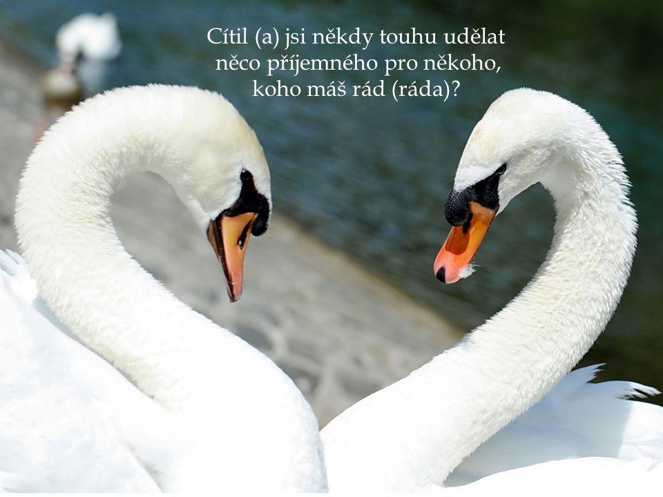 BŮH je milosrdný k těm, co chtějí žít pro lásku …