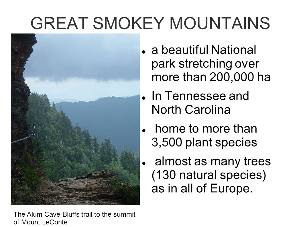 GREAT SMOKEY MOUNTAINS a beautiful National park stretching over more than 200,000 ha In Tennessee and North Carolina home to more than 3,500 plant species almost as many trees (130 natural species) as in all of Europe.