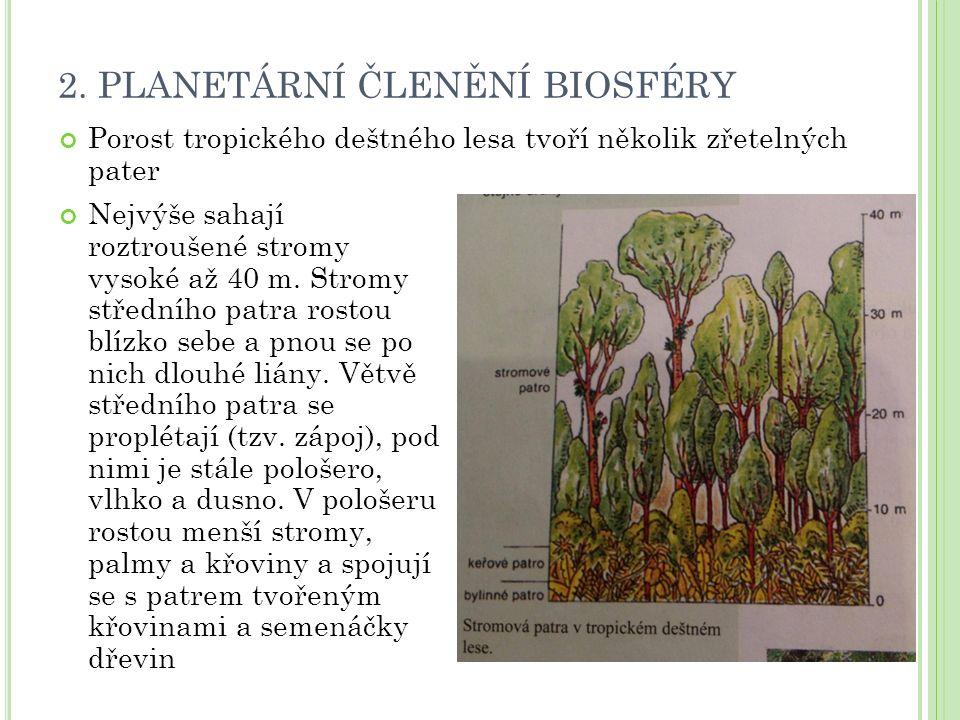 2. PLANETÁRNÍ ČLENĚNÍ BIOSFÉRY Porost tropického deštného lesa tvoří několik zřetelných pater Nejvýše sahají roztroušené stromy vysoké až 40 m. Stromy