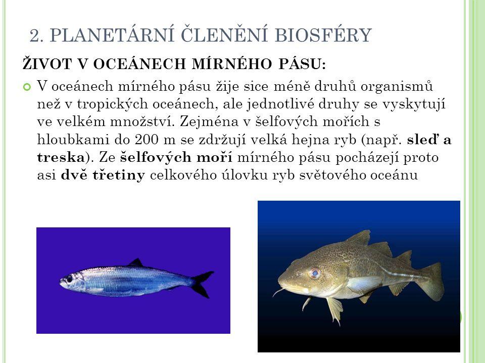2. PLANETÁRNÍ ČLENĚNÍ BIOSFÉRY ŽIVOT V OCEÁNECH MÍRNÉHO PÁSU: V oceánech mírného pásu žije sice méně druhů organismů než v tropických oceánech, ale je