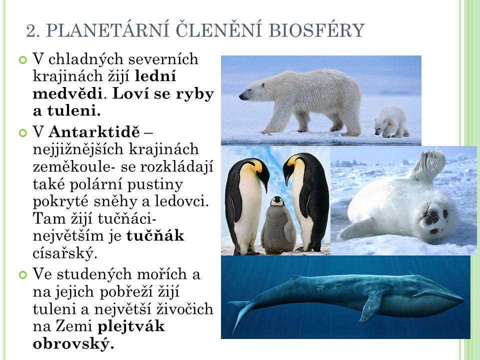 2. PLANETÁRNÍ ČLENĚNÍ BIOSFÉRY V chladných severních krajinách žijí lední medvědi. Loví se ryby a tuleni. V Antarktidě – nejjižnějších krajinách zeměk