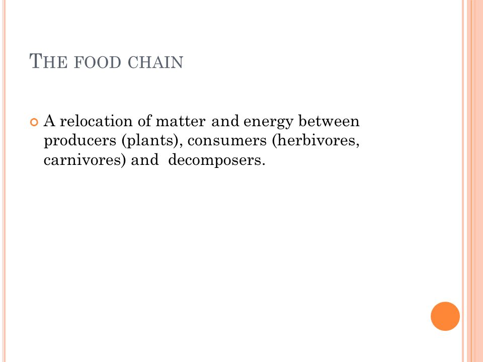 T HE FOOD CHAIN A relocation of matter and energy between producers (plants), consumers (herbivores, carnivores) and decomposers.