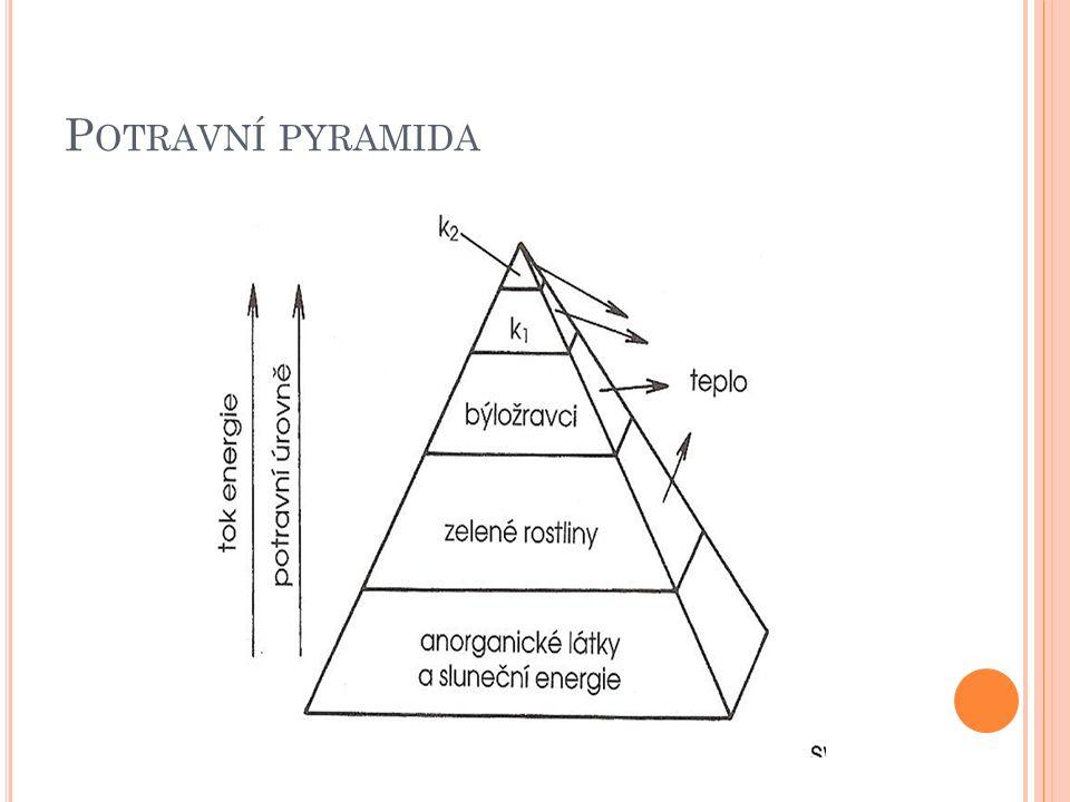 P OTRAVNÍ PYRAMIDA