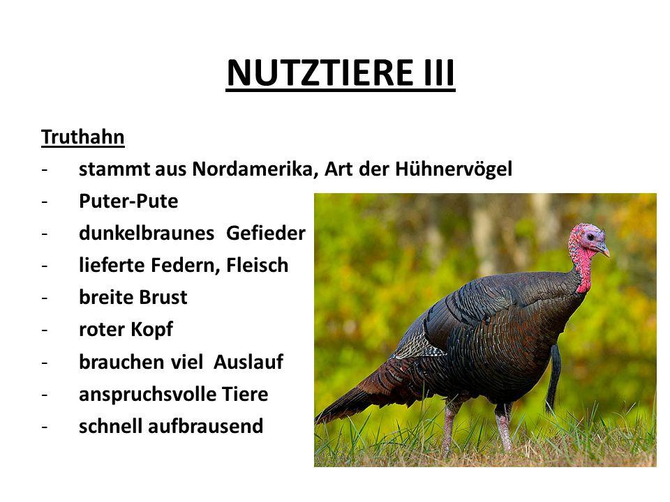NUTZTIERE III Truthahn -stammt aus Nordamerika, Art der Hühnervögel -Puter-Pute -dunkelbraunes Gefieder -lieferte Federn, Fleisch -breite Brust -roter Kopf -brauchen viel Auslauf -anspruchsvolle Tiere -schnell aufbrausend