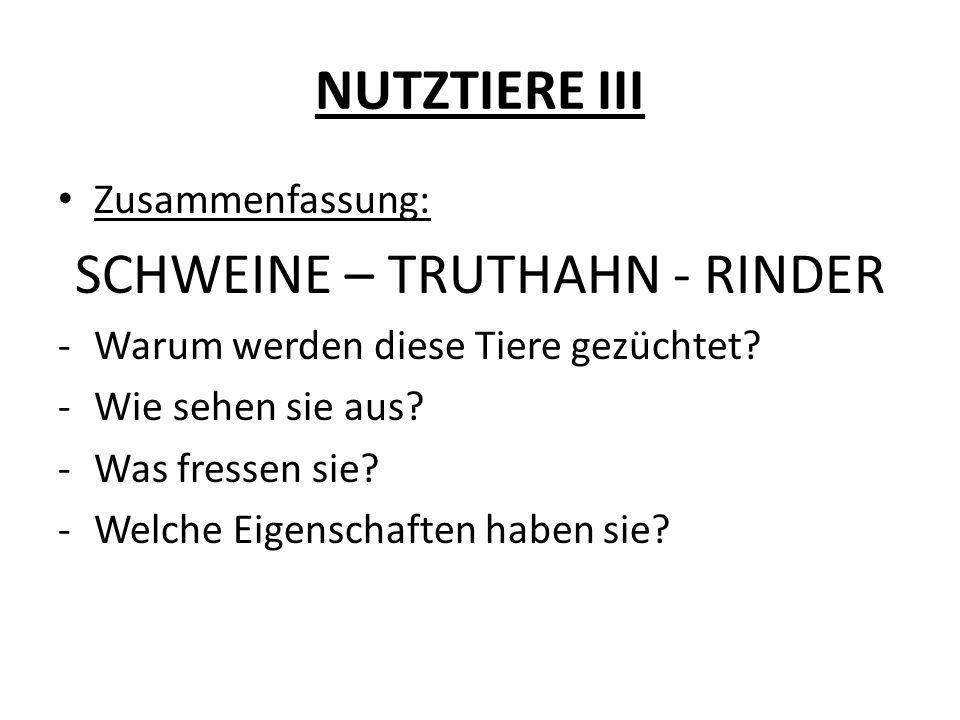 NUTZTIERE III Zusammenfassung: SCHWEINE – TRUTHAHN - RINDER -Warum werden diese Tiere gezüchtet? -Wie sehen sie aus? -Was fressen sie? -Welche Eigensc