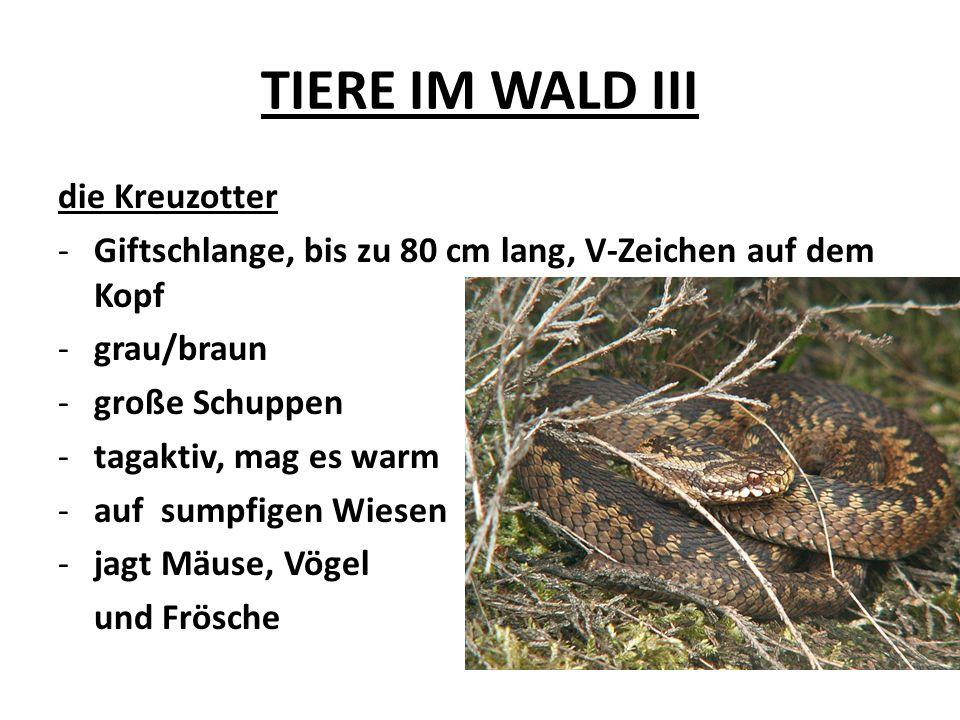 TIERE IM WALD III die Kreuzotter -Giftschlange, bis zu 80 cm lang, V-Zeichen auf dem Kopf -grau/braun -große Schuppen -tagaktiv, mag es warm -auf sump
