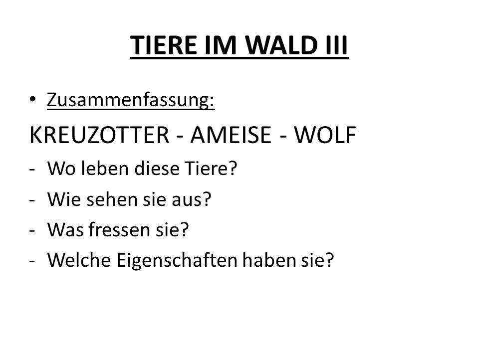 TIERE IM WALD III Zusammenfassung: KREUZOTTER - AMEISE - WOLF -Wo leben diese Tiere? -Wie sehen sie aus? -Was fressen sie? -Welche Eigenschaften haben