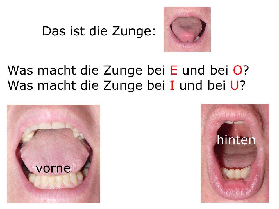 Das ist die Zunge: Was macht die Zunge bei E und bei O? Was macht die Zunge bei I und bei U? vorne hinten