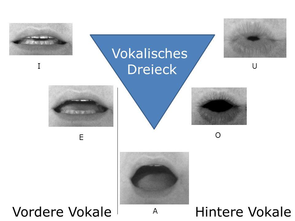 Vokalisches Dreieck I E A O U Vordere VokaleHintere Vokale