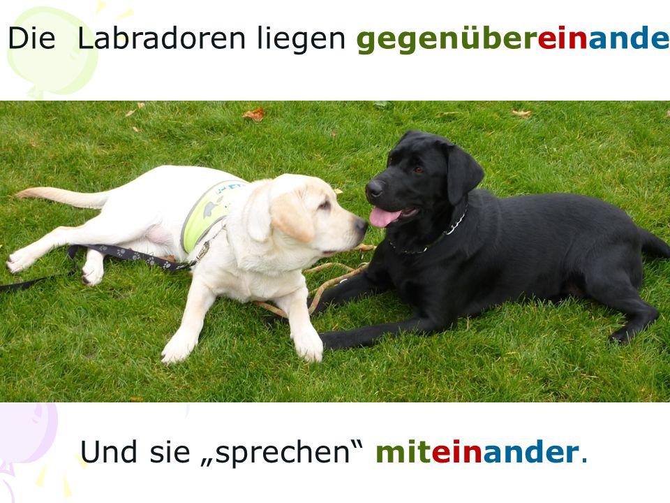 Die Labradoren liegen gegenübereinander. Und sie sprechen miteinander.