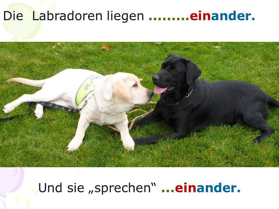 Die Labradoren liegen.........einander. Und sie sprechen...einander.