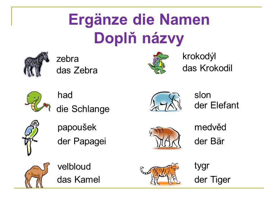 Ergänze die Namen Doplň názvy zebra das Zebra had die Schlange papoušek der Papagei velbloud das Kamel krokodýl das Krokodil slon der Elefant der Bär
