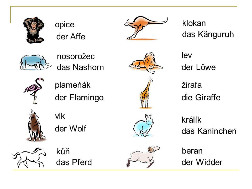 opice der Affe nosorožec das Nashorn plameňák der Flamingo vlk der Wolf kůň das Pferd klokan das Känguruh lev der Löwe žirafa die Giraffe králík das K