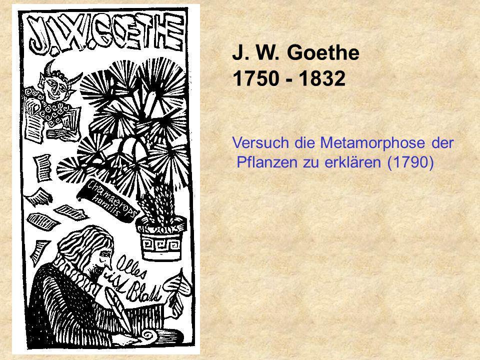 J. W. Goethe 1750 - 1832 Versuch die Metamorphose der Pflanzen zu erklären (1790)