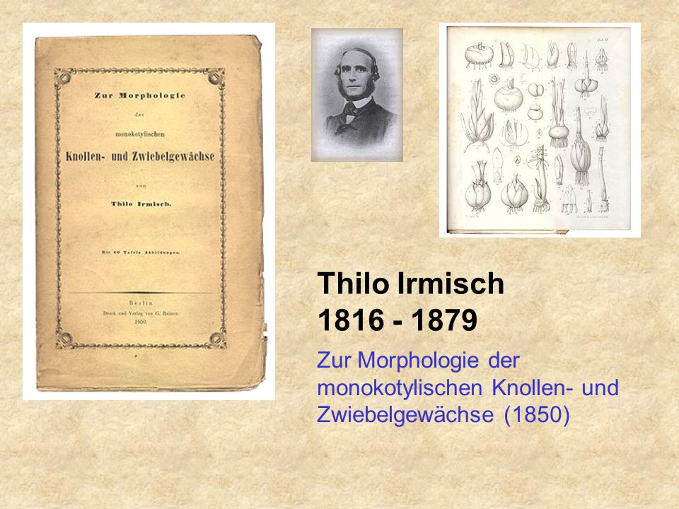 Thilo Irmisch 1816 - 1879 Zur Morphologie der monokotylischen Knollen- und Zwiebelgewächse (1850)