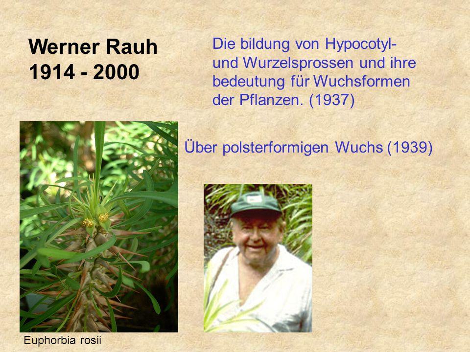 Werner Rauh 1914 - 2000 Die bildung von Hypocotyl- und Wurzelsprossen und ihre bedeutung für Wuchsformen der Pflanzen.