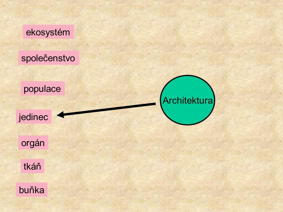 Architektura ekosystém společenstvo populace jedinec orgán tkáň buňka