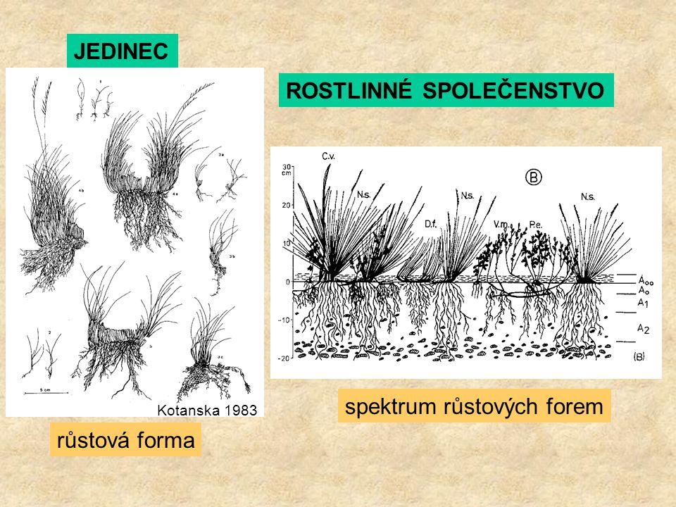 ROSTLINNÉ SPOLEČENSTVO spektrum růstových forem Kotanska 1983 JEDINEC růstová forma