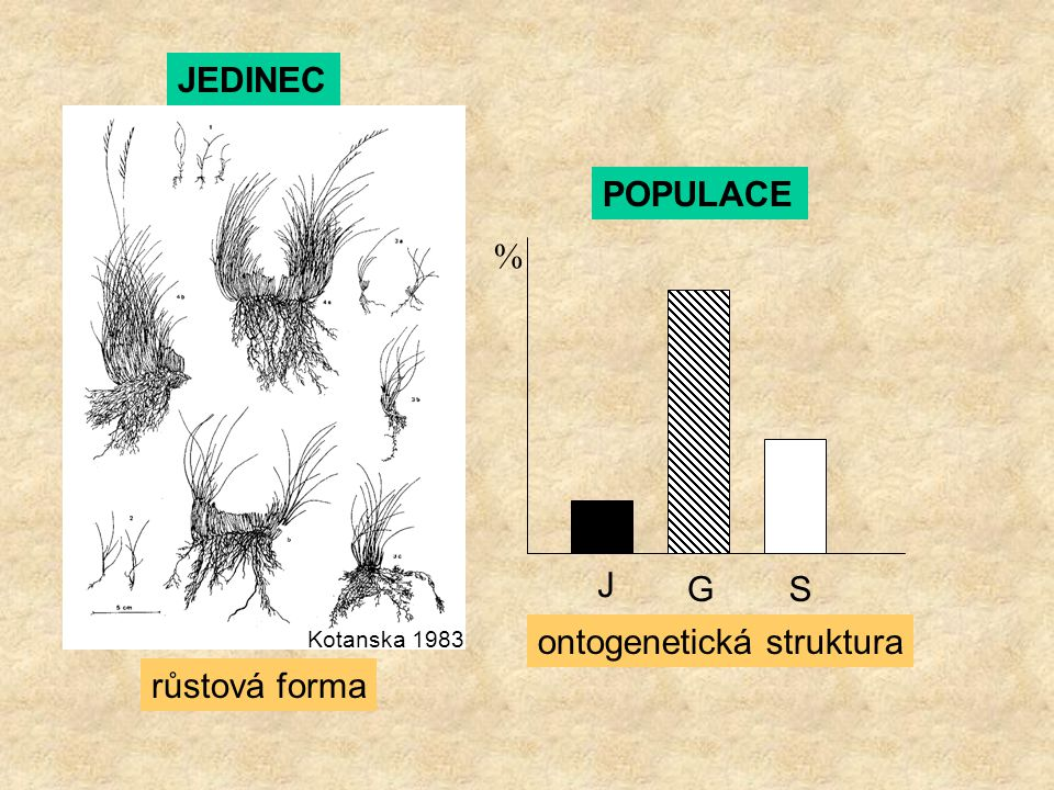 J GS % Kotanska 1983 JEDINEC POPULACE růstová forma ontogenetická struktura