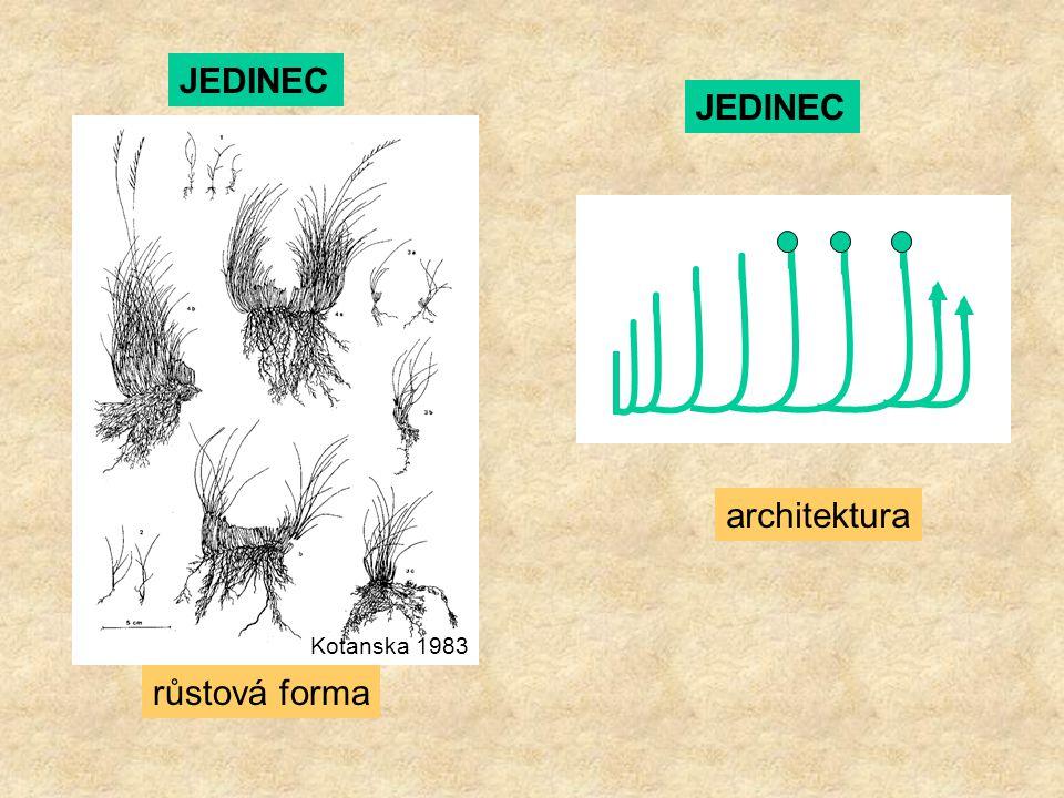 JEDINEC architektura Kotanska 1983 JEDINEC růstová forma