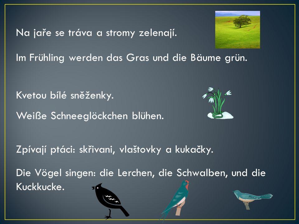 Die Vögel singen: die Lerchen, die Schwalben, und die Kuckkucke. Zpívají ptáci: skřivani, vlaštovky a kukačky. Na jaře se tráva a stromy zelenají. Im