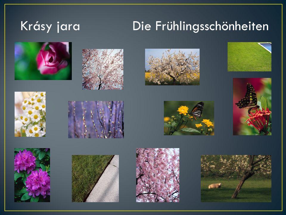 Krásy jaraDie Frühlingsschönheiten