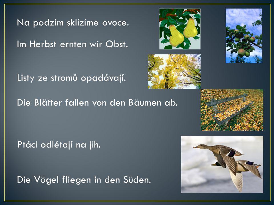 Na podzim sklízíme ovoce. Im Herbst ernten wir Obst. Listy ze stromů opadávají. Die Blätter fallen von den Bäumen ab. Ptáci odlétají na jih. Die Vögel