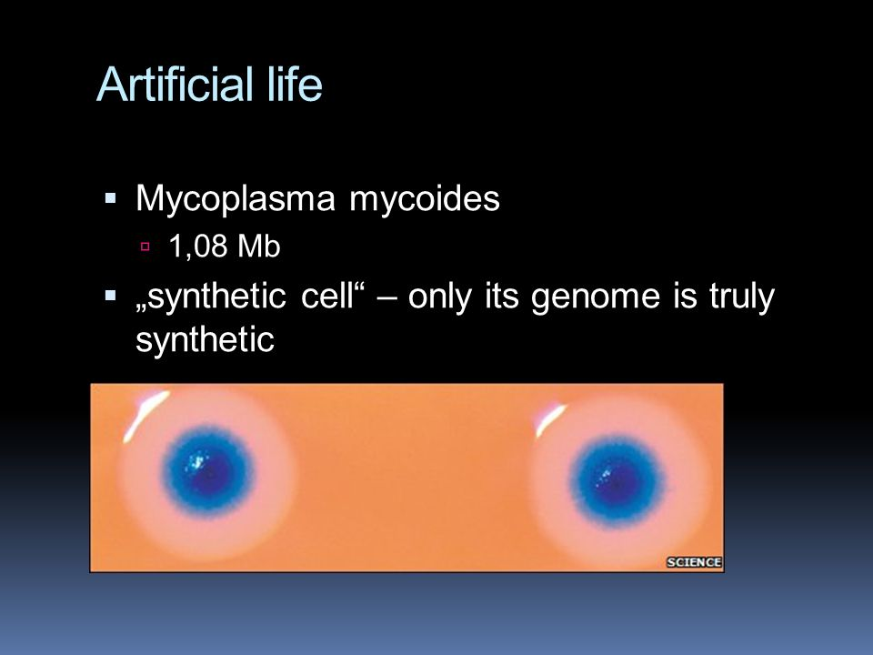 "Artificial life  Mycoplasma mycoides  1,08 Mb  ""synthetic cell – only its genome is truly synthetic"
