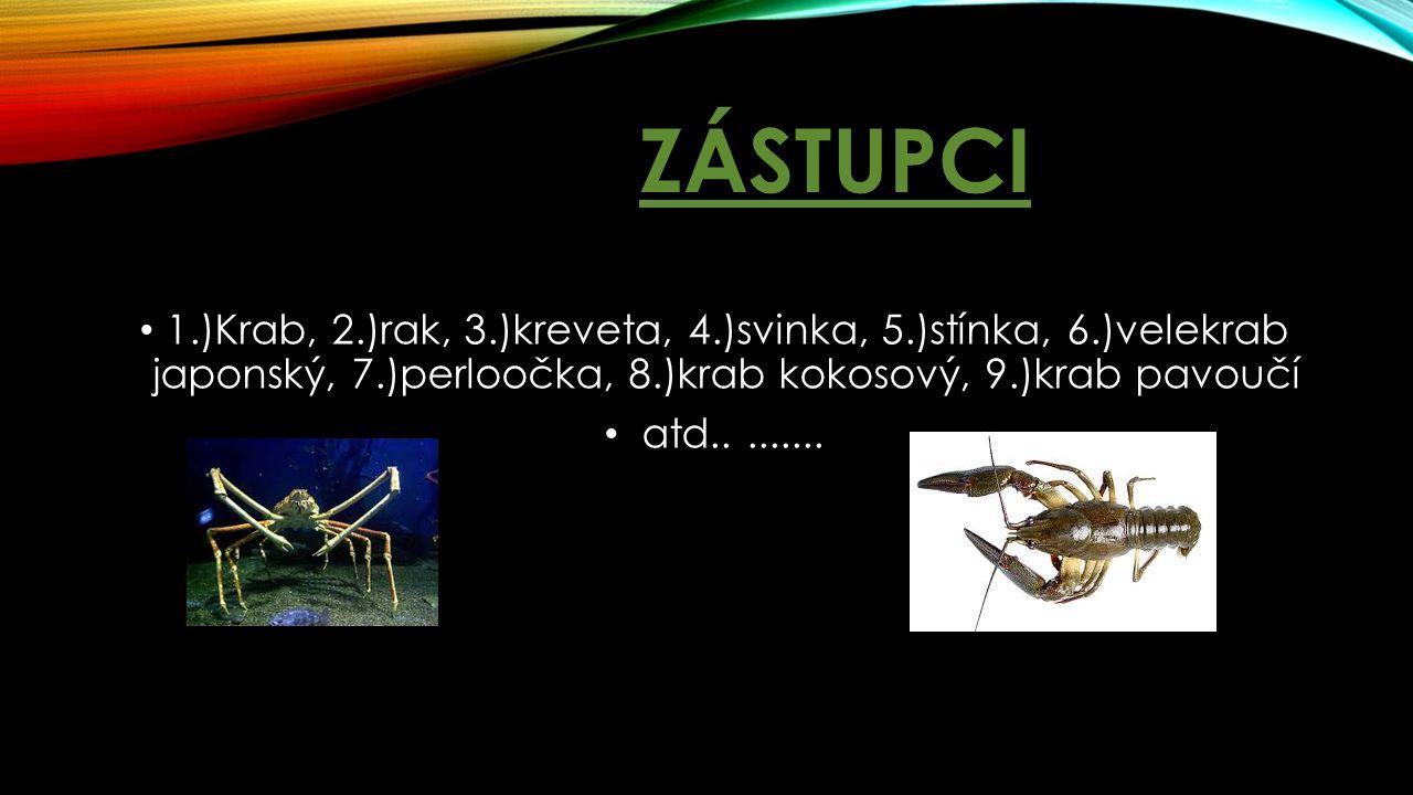 ZÁSTUPCI 1.)Krab, 2.)rak, 3.)kreveta, 4.)svinka, 5.)stínka, 6.)velekrab japonský, 7.)perloočka, 8.)krab kokosový, 9.)krab pavoučí atd.........