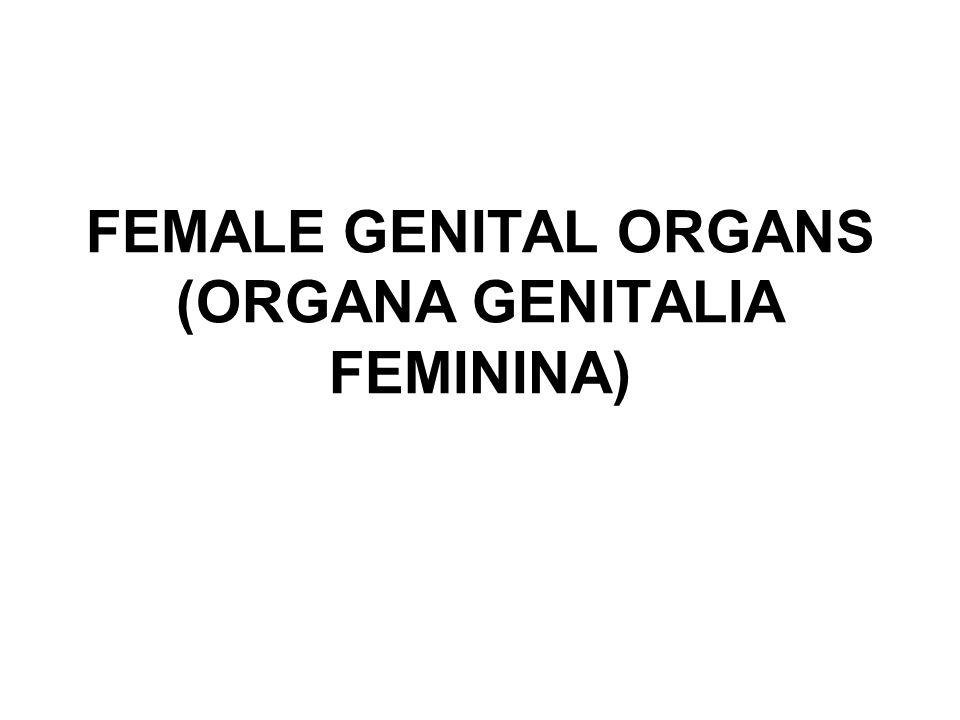 FEMALE GENITAL ORGANS (ORGANA GENITALIA FEMININA)