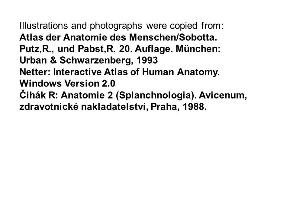 Illustrations and photographs were copied from: Atlas der Anatomie des Menschen/Sobotta. Putz,R., und Pabst,R. 20. Auflage. München: Urban & Schwarzen