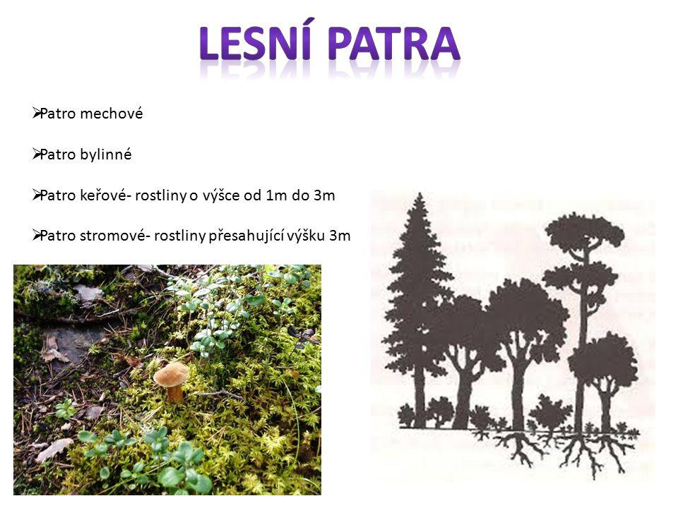  Patro mechové  Patro bylinné  Patro keřové- rostliny o výšce od 1m do 3m  Patro stromové- rostliny přesahující výšku 3m