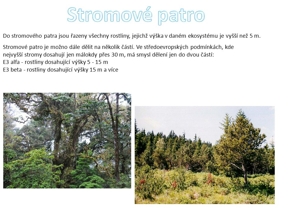 Do stromového patra jsou řazeny všechny rostliny, jejichž výška v daném ekosystému je vyšší než 5 m.