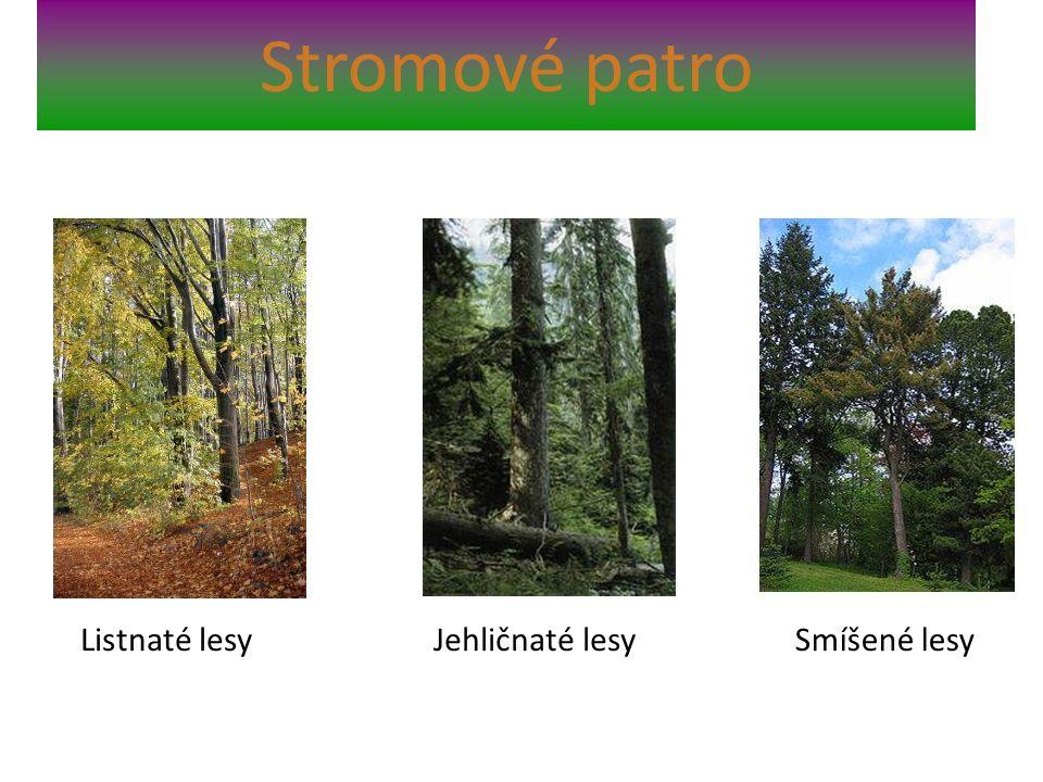 Stromové patro Listnaté lesyJehličnaté lesySmíšené lesy