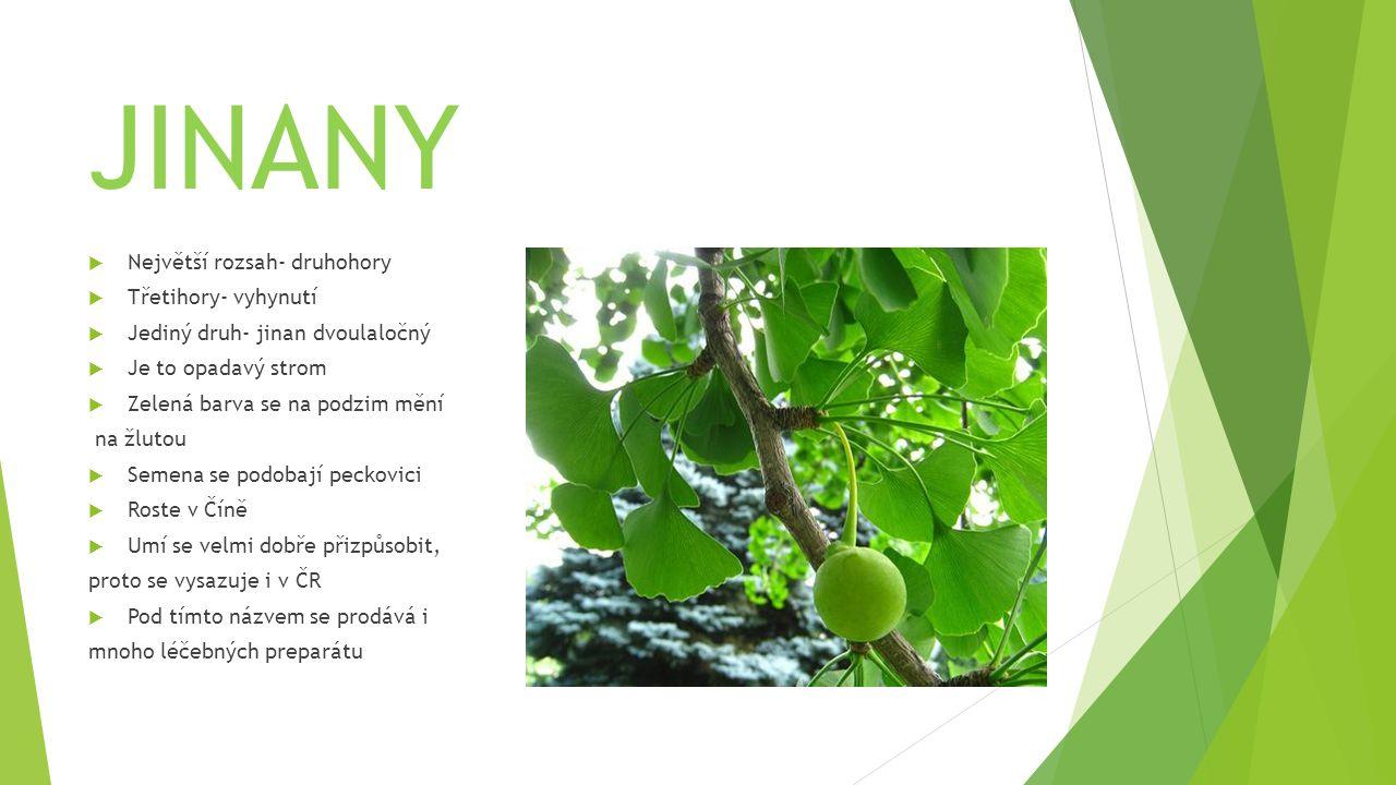 JINANY  Největší rozsah- druhohory  Třetihory- vyhynutí  Jediný druh- jinan dvoulaločný  Je to opadavý strom  Zelená barva se na podzim mění na ž