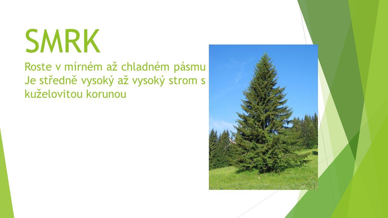 SMRK Roste v mírném až chladném pásmu Je středně vysoký až vysoký strom s kuželovitou korunou