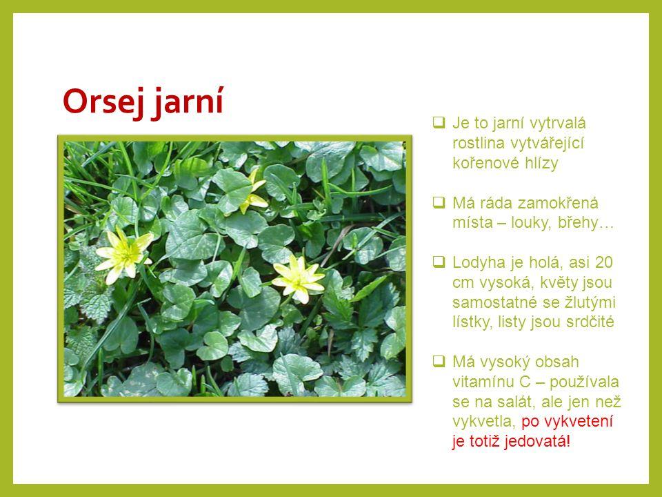 Orsej jarní  Je to jarní vytrvalá rostlina vytvářející kořenové hlízy  Má ráda zamokřená místa – louky, břehy…  Lodyha je holá, asi 20 cm vysoká, k