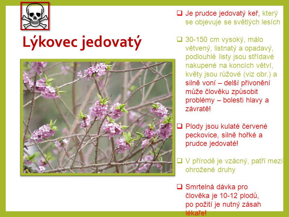 Konvalinka vonná  Je vytrvalá jedovatá rostlina rozšířená po celé Evropě rostoucí ve světlých lesích  Pěstuje se také jako okrasná, byly vyšlechtěny různobarevné odrůdy  Je až 20 cm vysoká s plazivým oddenkem, dva jednoduché listy, bílé, voňavé květy rostou v hroznu na přímém stvolu, plodem jsou jedovaté jasně červené bobule  K otravě dochází po požití stonků či listů nebo pojídání plodů, i vypití vody z vázy je nebezpečné, příznaky otravy jsou nevolnost, zažívací obtíže, křeče atd.
