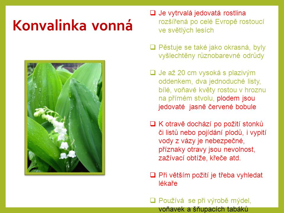 Konvalinka vonná  Je vytrvalá jedovatá rostlina rozšířená po celé Evropě rostoucí ve světlých lesích  Pěstuje se také jako okrasná, byly vyšlechtěny