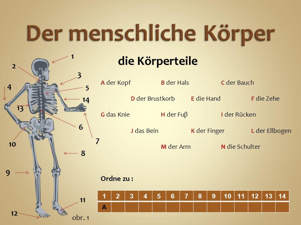 die Körperteile A der KopfB der HalsC der Bauch D der BrustkorbE die HandF die Zehe G das KnieH der FuβI der Rücken J das BeinK der FingerL der Ellbogen M der ArmN die Schulter 1234567891011121314 A Ordne zu : 1 2 3 4 5 6 7 8 9 11 12 10 13 14 obr.