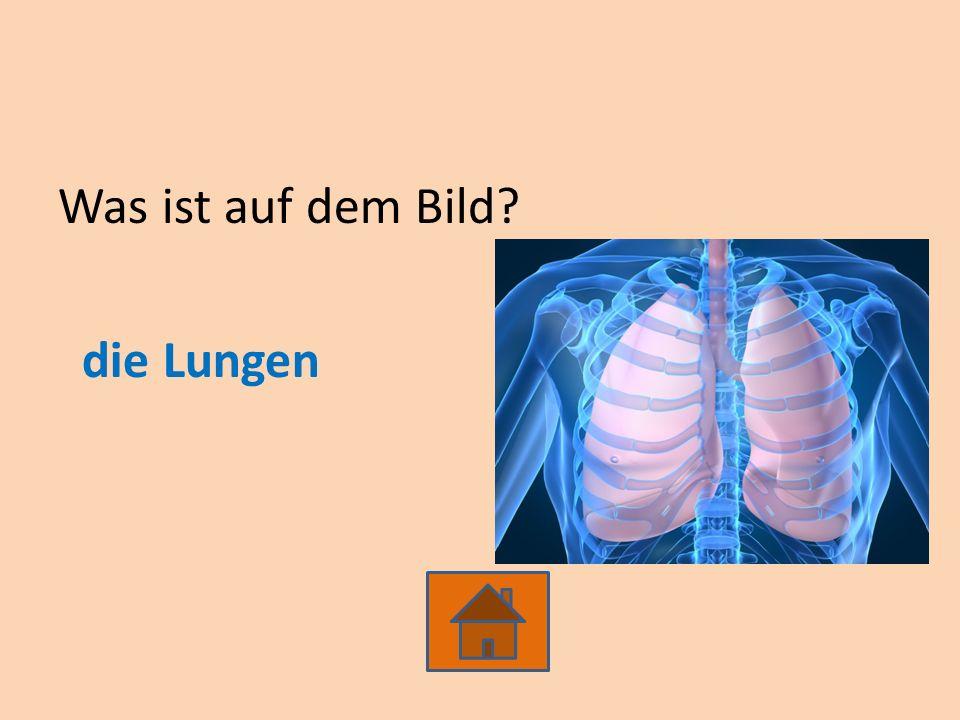 Was ist auf dem Bild? die Lungen
