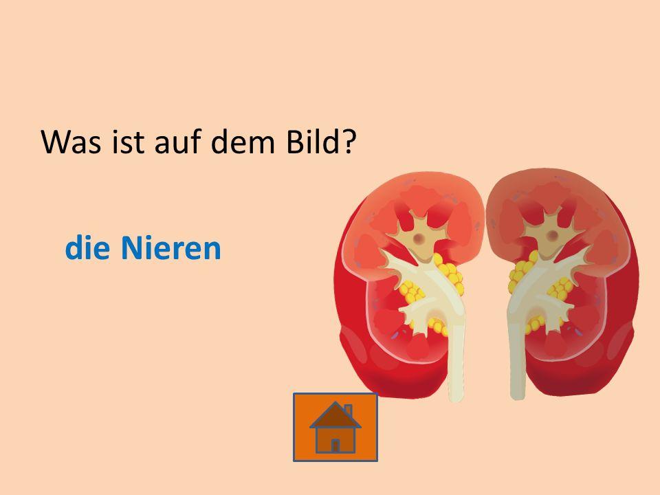 Was ist auf dem Bild die Nieren