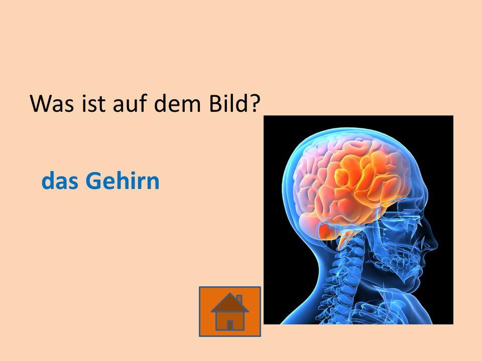 Was ist auf dem Bild? das Gehirn