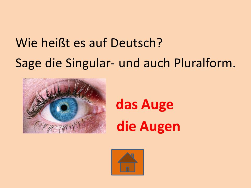 Wie heißt es auf Deutsch? Sage die Singular- und auch Pluralform. das Auge die Augen